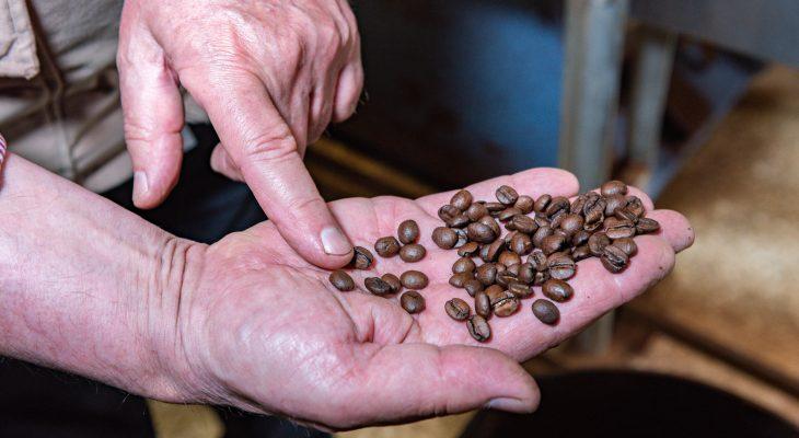Café-Pierrette-Féchain-grains-de-café-toréfié