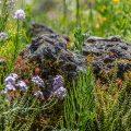 Jardin-Floralpina-Arras_Rocaille_017low
