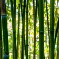 Jardin Tanam-Hutan_Bambous